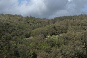 Foro che mostra l'orto di Vittorio immerso nel bosco presa da una collina vicina