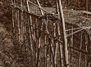 Particolare di una struttura di legno per la protezione degli ortaggi realizzata da Vittorio